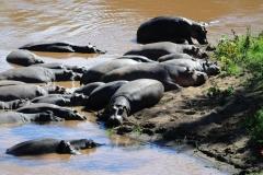 Бегемоты на отдыхе
