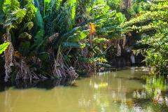 растительность Маврикия