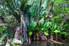 густые заросли на берегу реки (Маврикий)