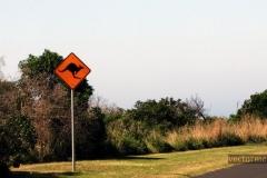 Знак Осторожно Кенгуру (Австралия)